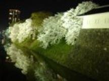 霞城公園(夜桜)