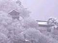 春夏秋冬観光コース(冬)